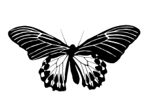 Butterfly cut out