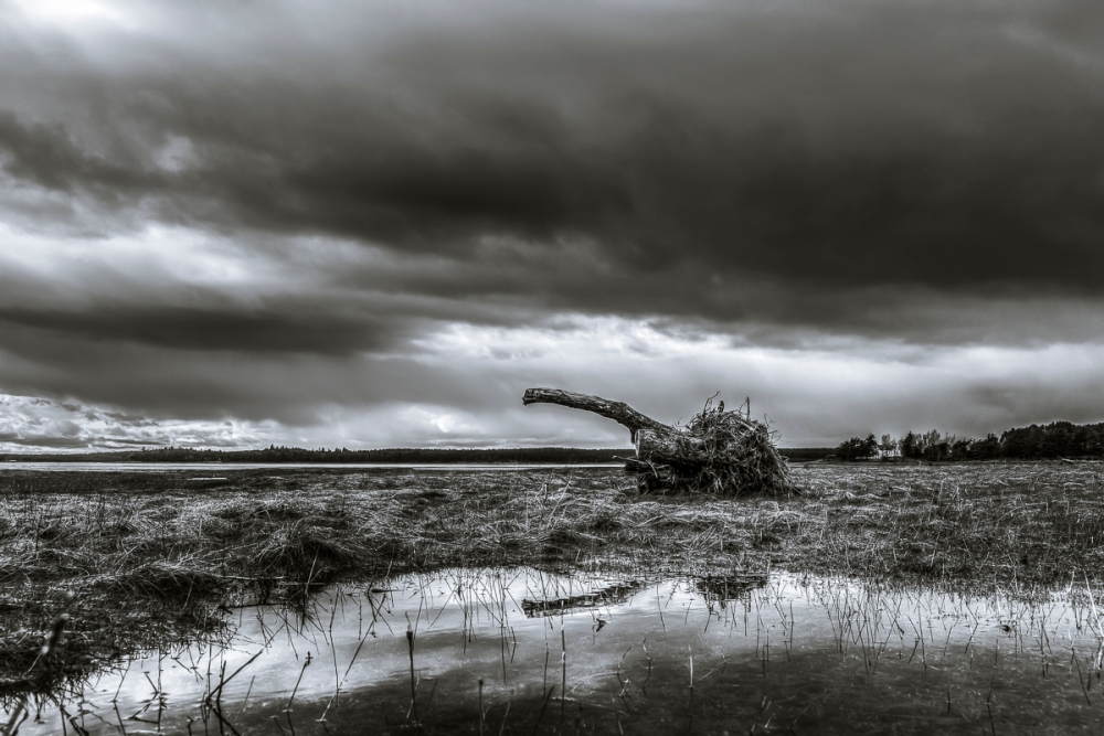 Findhorn Bay by Ewan Mathers