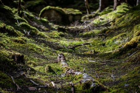 Curves in the Forest - Assynt